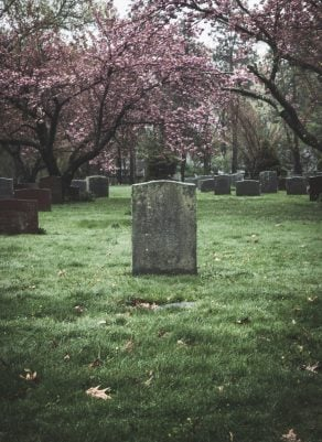 A grave with a blossom tree behind it.