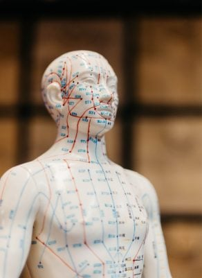 Full-body reference model maps the body's acupuncture meridian points for acupuncturists.